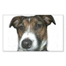 Handsome Jack Russell Terrier Decal