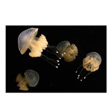 4 Spotted Jellies Postcards (Package of 8)