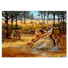 Sabre-toothed cats fighting Poster