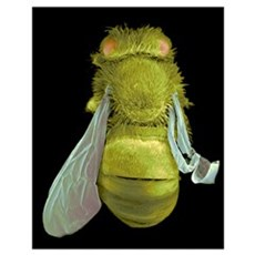 Infected bee, SEM Poster
