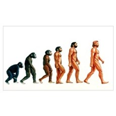 Stages in human evolution Framed Print