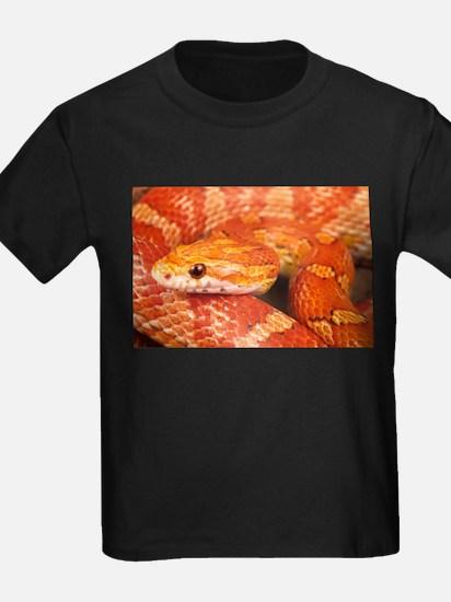 Corn Snake T