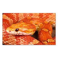 Corn Snake Decal