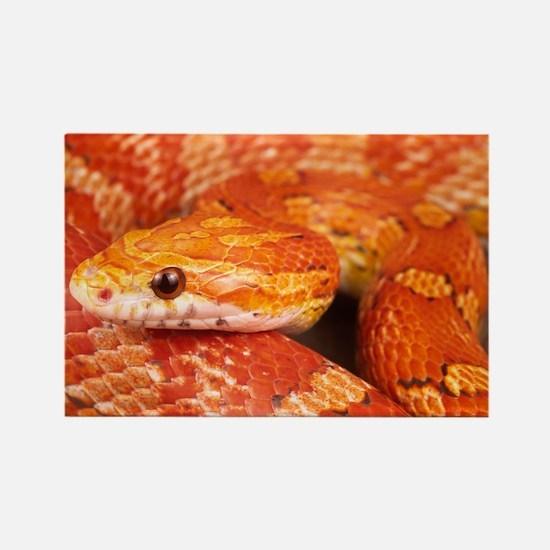 Corn Snake Rectangle Magnet