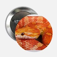 "Corn Snake 2.25"" Button"