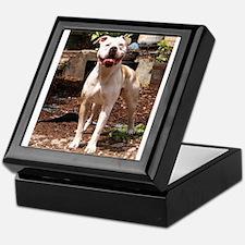 American Bulldog Keepsake Box