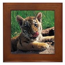 Baby Tiger Framed Tile