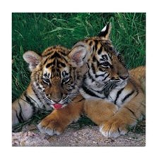 Two Baby Tigers Tile Coaster