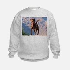 Lovable Chocolate Lab Sweatshirt