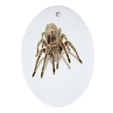 Tarantula Oval Ornament