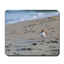 Seagull on Beach Mousepad