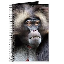 Gelada Baboon Journal