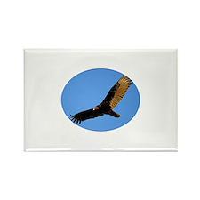 Turkey Vulture in Flight Rectangle Magnet