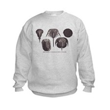 Trilobites Sweatshirt