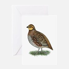 Bobwhite Quail Hen Greeting Card