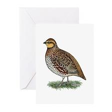 Bobwhite Quail Hen Greeting Cards (Pk of 10)