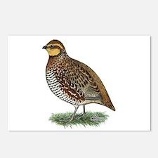 Bobwhite Quail Hen Postcards (Package of 8)