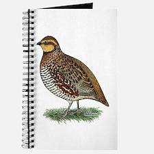 Bobwhite Quail Hen Journal