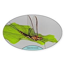 Hexagenia atrocaudata Mayfly Oval Decal