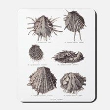Fossil Shells Mousepad