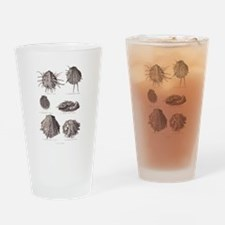 Fossil Shells Drinking Glass