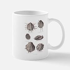 Fossil Shells Mug