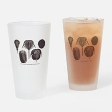 Trilobites Drinking Glass