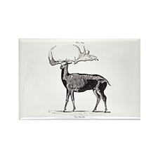 Irish Elk Rectangle Magnet