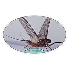 Leptophlebia cupida Mayfly Oval Decal