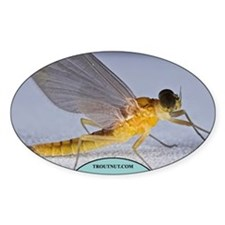Little Yellow Mayfly Oval Decal
