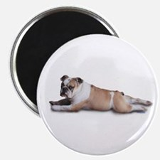 "Lounging Bulldog 2.25"" Magnet (100 pack)"