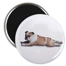 Lounging Bulldog Magnet