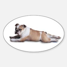 Lounging Bulldog Oval Decal