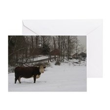 Cow in Snow (X-mas) Greeting Card