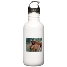 Two highland calves with mama cow Water Bottle