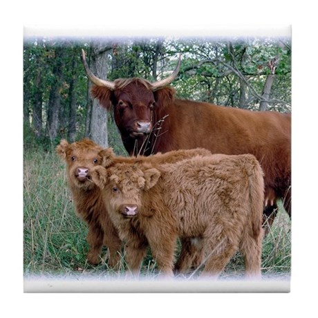 Two highland calves with mama cow Tile Coaster