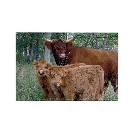 Two highland calves with mama cow Rectangle Magnet