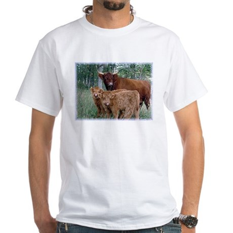 Two highland calves with mama cow White T-Shirt