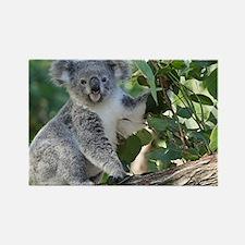 Cute koala Rectangle Magnet