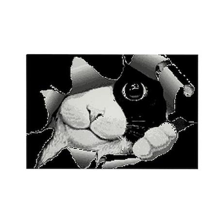 Peek-A-Boo Kitty Rectangle Magnet