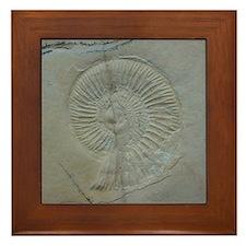 Fossil Shell Image Framed Tile