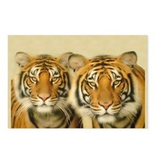 Two Tigers Staring Postcards (Package of 8)