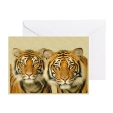 Two Tigers Staring Greeting Cards (Pk of 10)