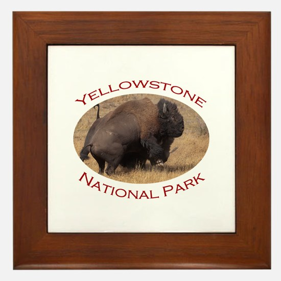 Yellowstone National Park...Bison Fighting Framed
