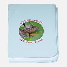 Everglades National Park...Baby Alligator baby bla