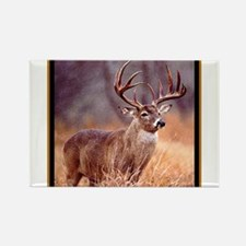 Wildlife Deer Buck Rectangle Magnet (100 pack)