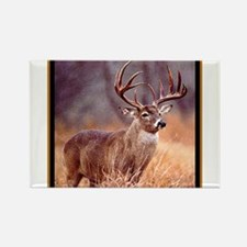 Wildlife Deer Buck Rectangle Magnet