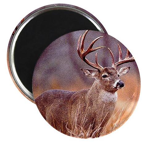 Wildlife Deer Buck Magnet