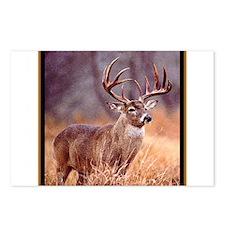 Wildlife Deer Buck Postcards (Package of 8)