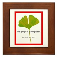The ginkgo is a living fossil. As am I Framed Tile
